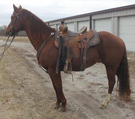 Horse Sale Highlites